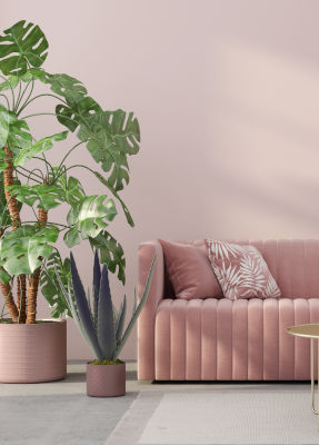 Pale pink velvet sofa, light pink wall with potted plants